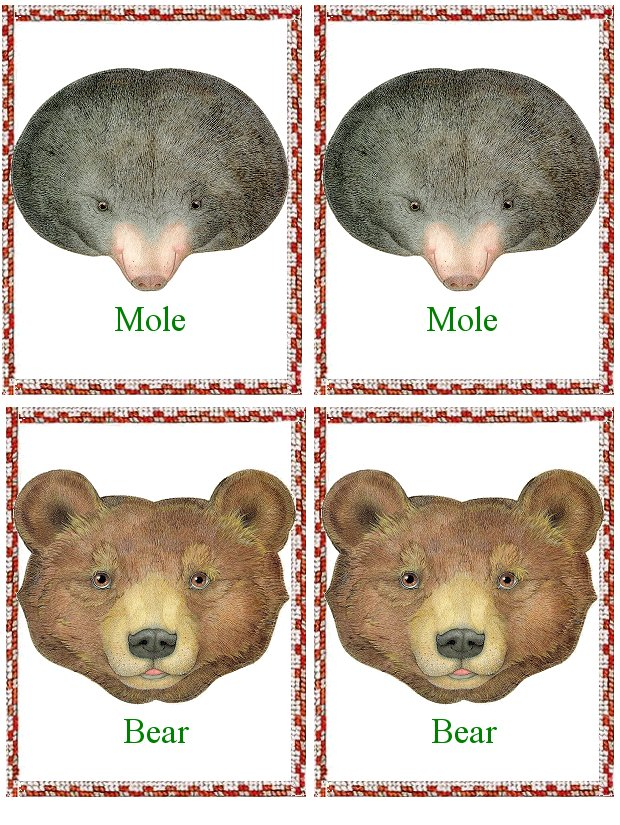 flash_card_animals_mole_and_bear