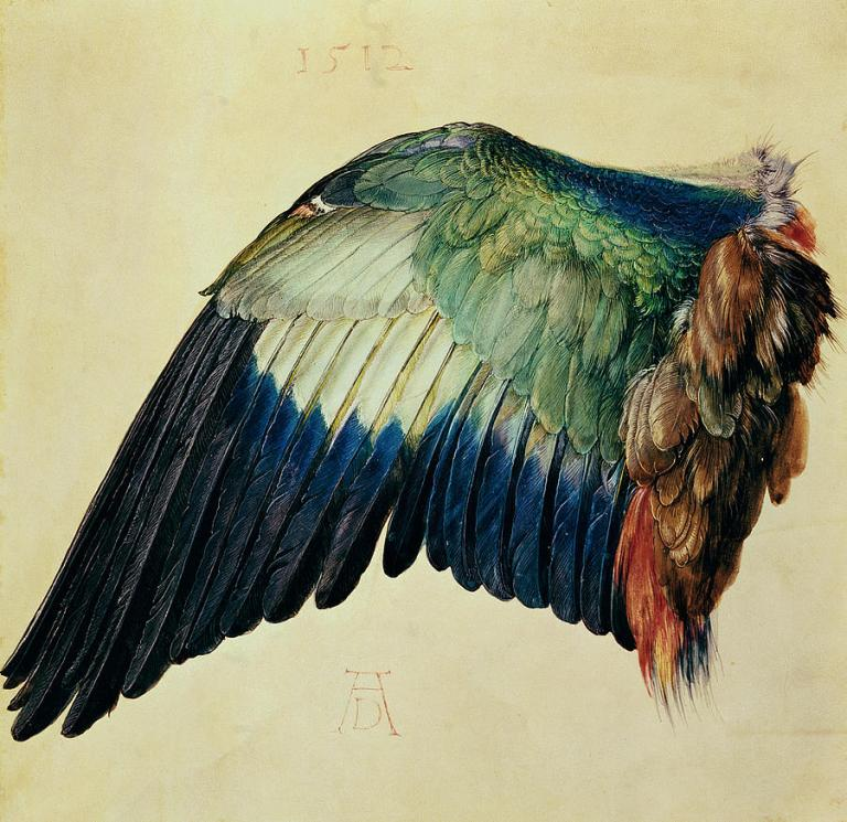 wing-of-a-blue-roller-albrecht-durer